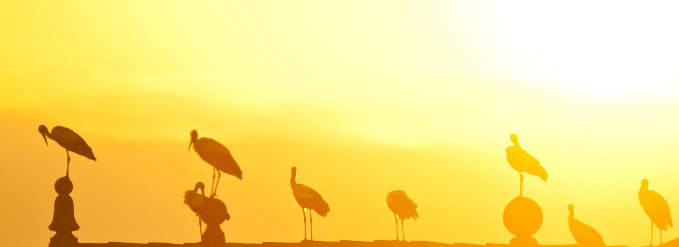 Un nuevo amanecer surge cuando se pone en acción aquello que amamos