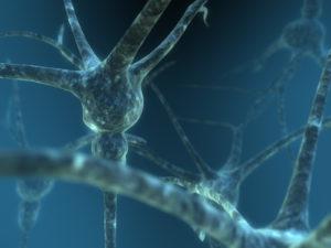 Primer doctorado en Biología Cuántica por Universidad de Surrey - image Neuron5-300x225 on https://equantum.org