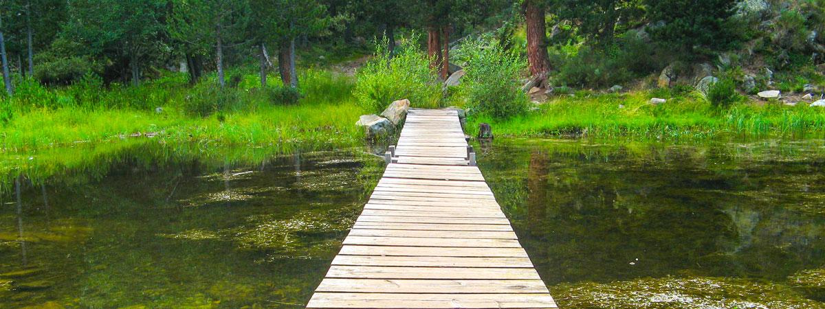 La Coherencia del Agua - image bridge5395 on https://equantum.org