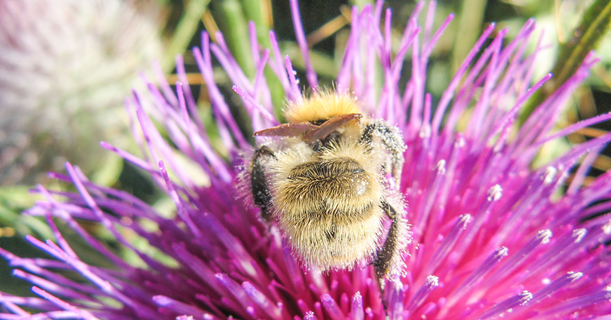 La Coherencia del Agua - image bumblebee_thistle on https://equantum.org